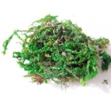 Sachet de Mousse Végétale Naturelle de Décoration