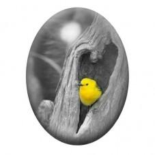 Cabochon en Verre Illustré Oiseau 13x18, 18x25 ou 30x40mm pour la Création de Bijoux Fantaisie - DIY