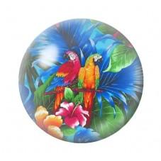 Cabochon en Verre Illustré Exotique Perroquets 12 à 25mm pour la Création de Bijoux Fantaisie - DIY