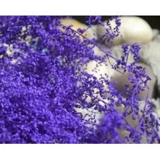 1 Sachet de Fleurs Séchées Violettes pour Globe Fiole