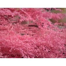 1 Sachet de Fleurs Séchées Rose pour Globe Fiole