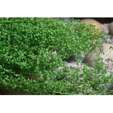 1 Sachet de Fleurs Séchées Vert pour Globe Fiole
